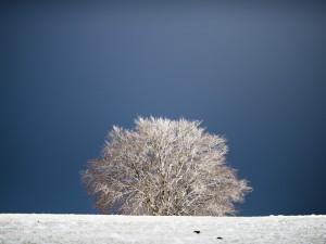 Arbre & neige